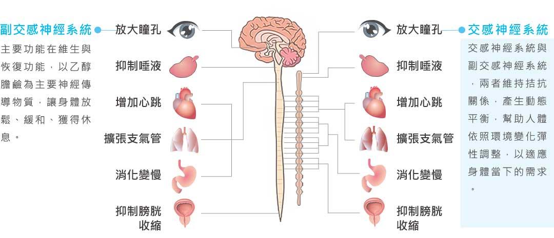 Tp&b芳療SPA頂尖優質講師 分享,如何【啟動自我療癒力,自律神經協奏曲】 -